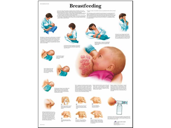 Anatomical Chart - Breastfeeding
