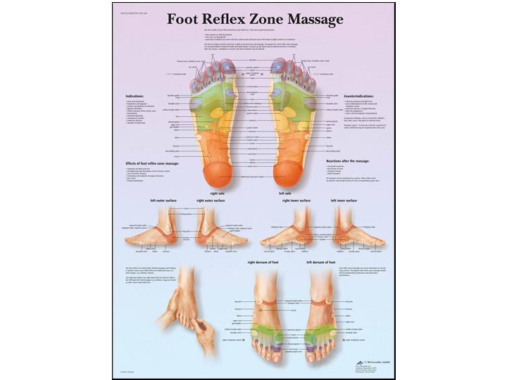 Anatomical Chart - Foot Reflex Zone Massage
