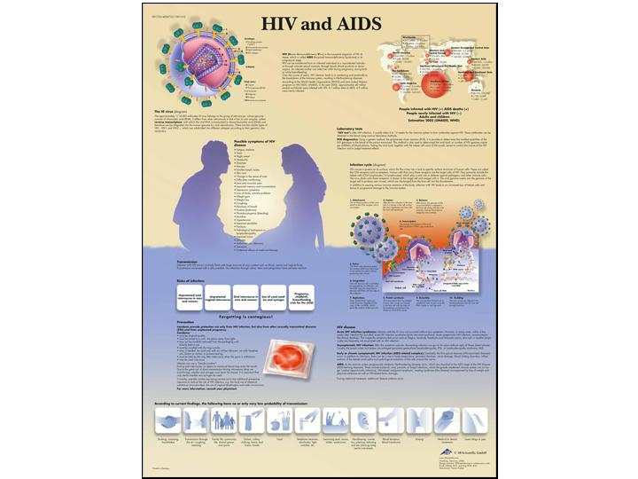 Anatomical Chart - HIV & AIDS