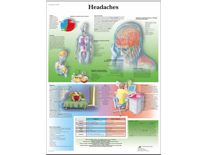 Anatomical Chart - Headaches