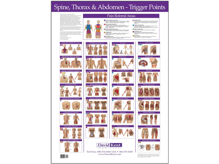 Anatomical Chart - Spine Thorax & Abdomen - Trigger Points