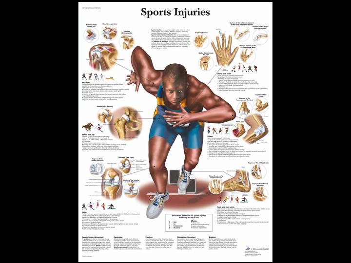 Anatomical Chart - Sports Injuries