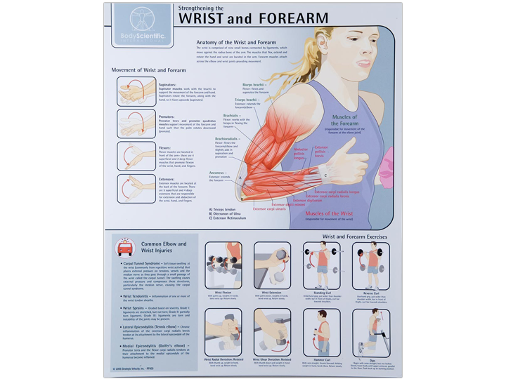 Anatomical Chart - Wrist and Forearm